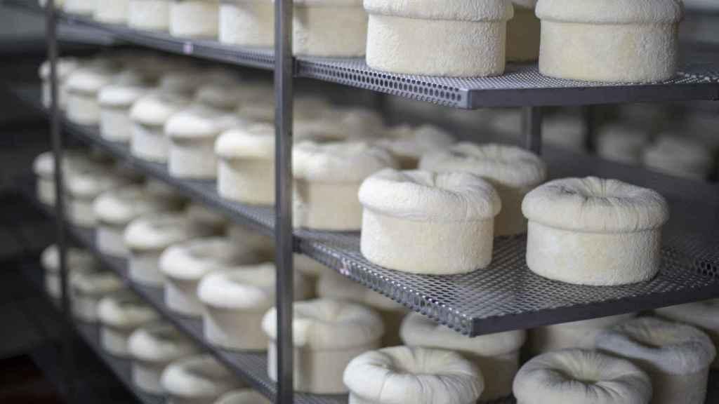 El interior de la cámara de maduración de los quesos D.O.P. Cebreiro, donde se curan durante, mínimo, 45 días.