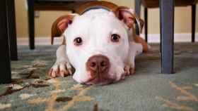 El cachorro sufría diarreas con sangre y acabó contrayendo la enfermedad de la parvovirosis.