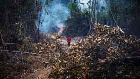 La fiscalización y el control de los delitos medioambientales en la Amazonia brasileña es cada vez más laxa.