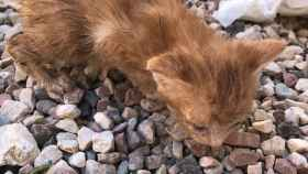 Protección Animal remite diligencias a la Policía para perseguir el abandono de una maleta con 5 cachorros de gato.