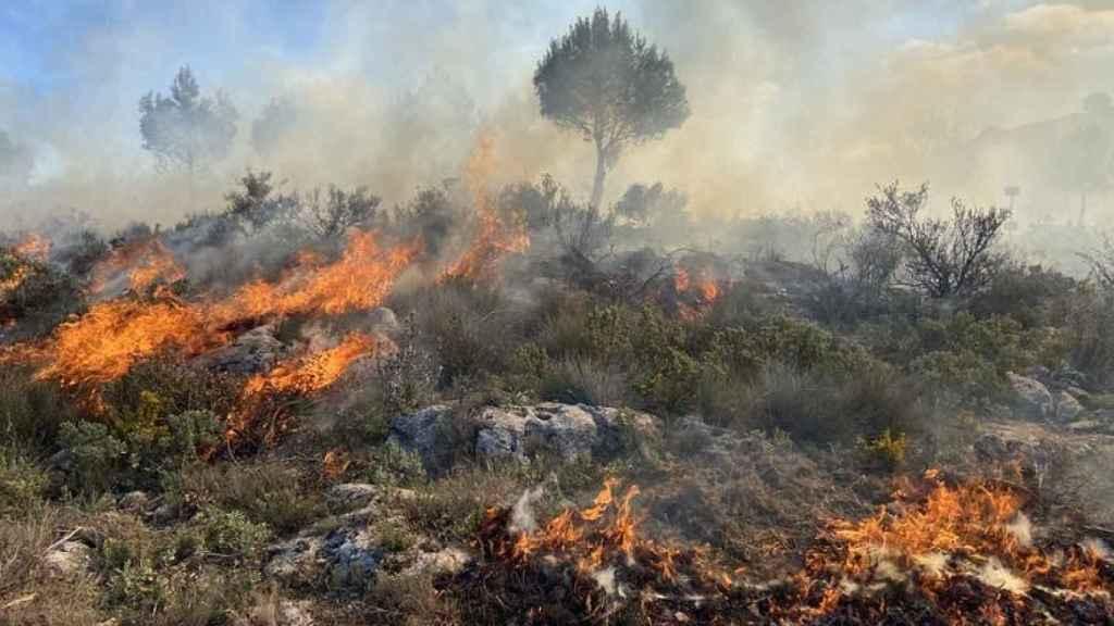 Fuego en un matorral mediterráneo.
