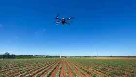 La primera finca agrícola de Bayer en España ubicada en Carmona (Sevilla)