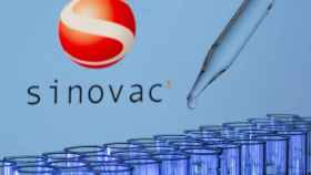 Test tubes are seen in front of a displayed Sinovac logo in this illustration taken