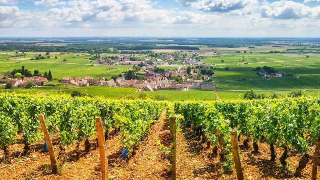 Viñedos en Borgoña.