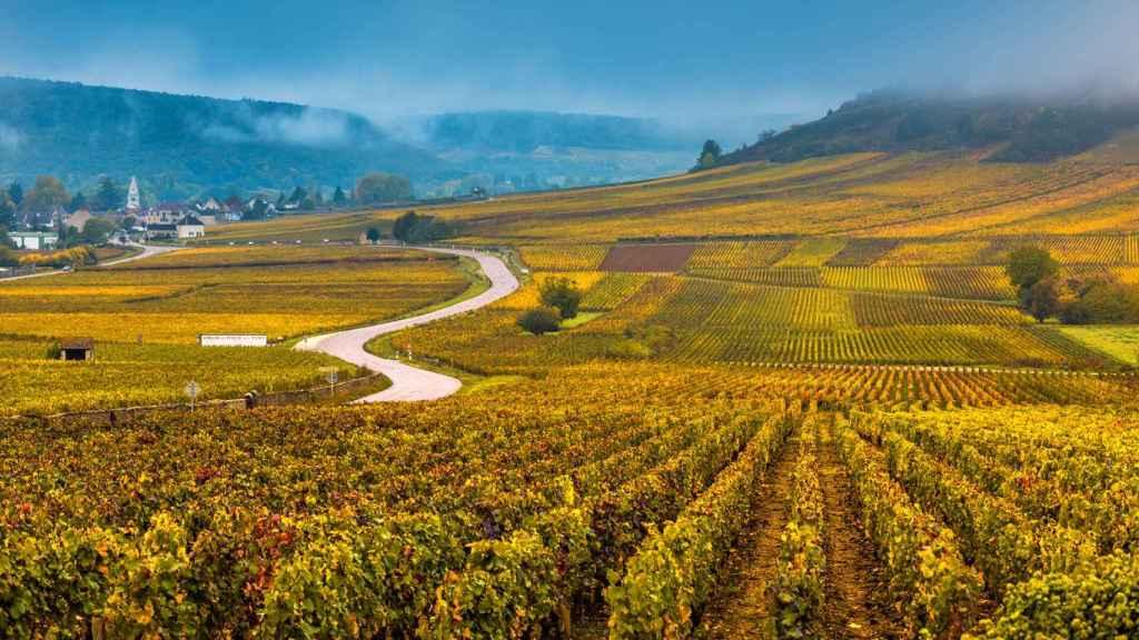Vista de viñedos borgoñeses.