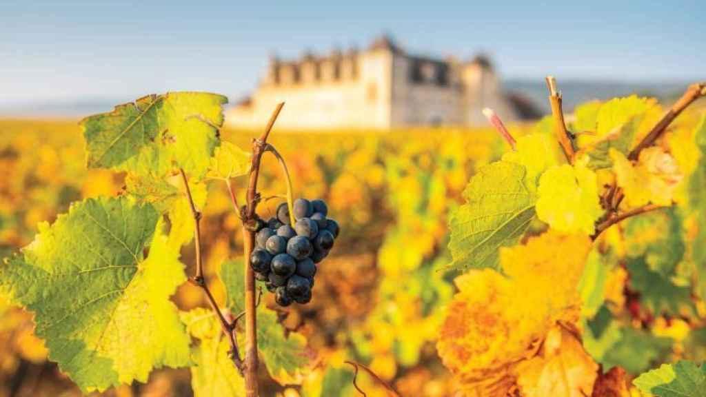 Borgoña, paraíso del vino.