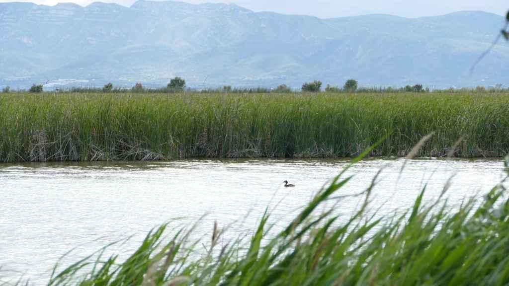 Humedales en el Delta del Ebro