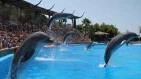 En Mundomar Benidorm los niños pueden nadar con delfines.