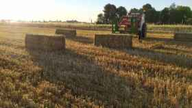 Campo de cereal en Castilla-La Mancha. Imagen de archivo de Europa Press