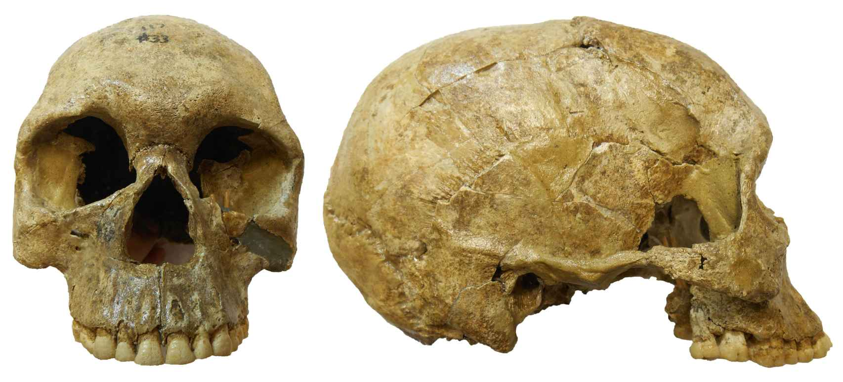 Cráneo de una de las personas enterradas en el cementerio prehistórico de Jebel Sahaba.
