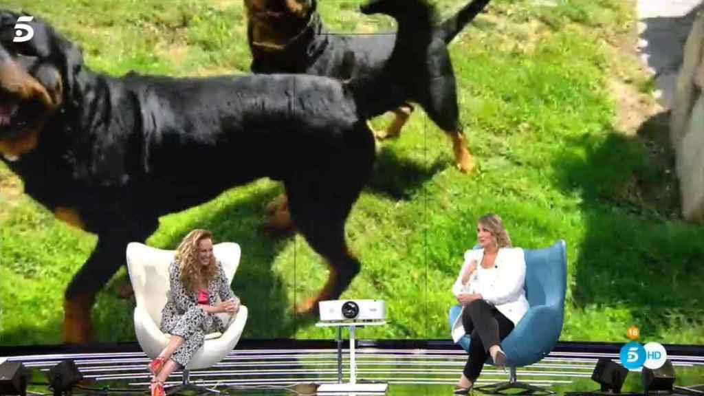 Los cuatro perros de Rocío Carrasco.
