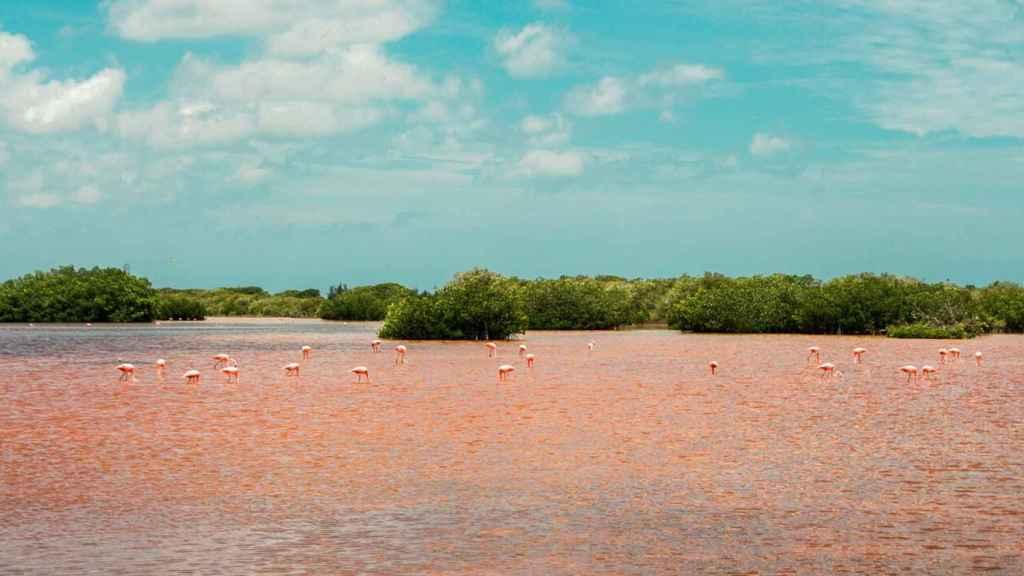 Los flamencos se alimentan principalmente de Artemia salina, un crustáceo invertebrado.