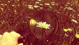 Una lupa enfoca flores en la naturaleza.