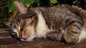 ¿Cómo dormir a un gato por la noche?