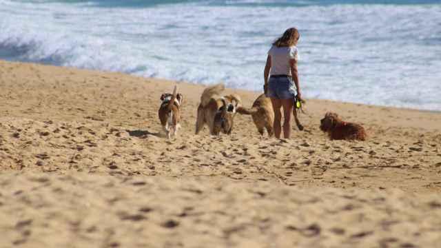 La playa del Gosset en Santa Pola es una de las favoritas.