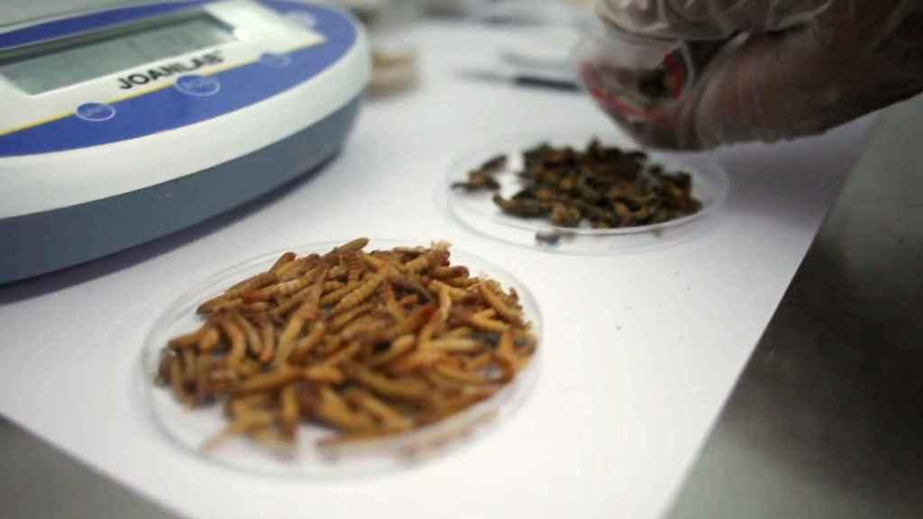 Uno de los desarrollos alimenticios de Insekt Label Biotech. Foto: Insekt Label Biotech.