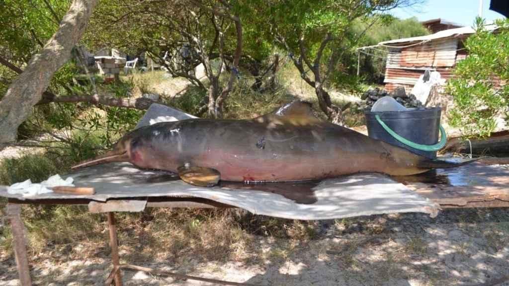 Es preciso reducir considerablemente la pesca accidental como primera medida urgente.