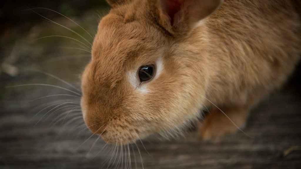 ¿Qué verduras pueden comer los conejos?