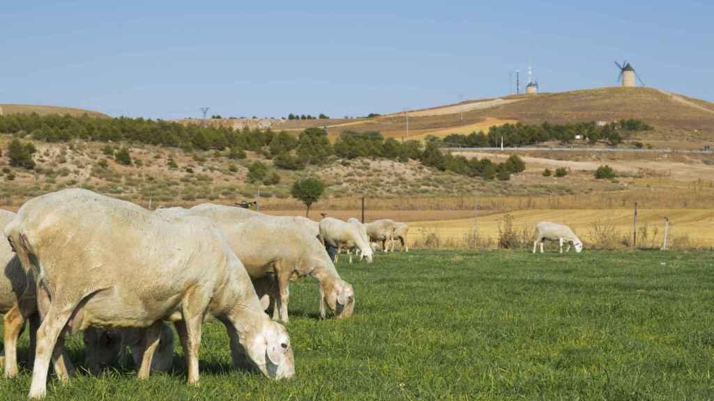 Espacio natural dedicado al pastoreo del ganado