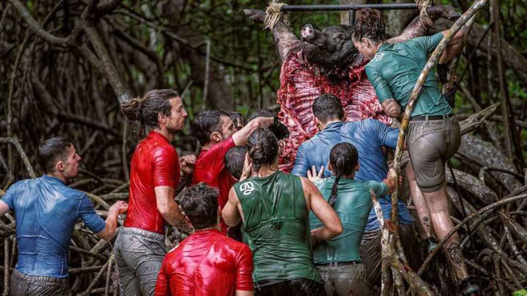 El juego de caníbales consiste en desmembrar un cerdo muerto a mordiscos para lograr la inmunidad.