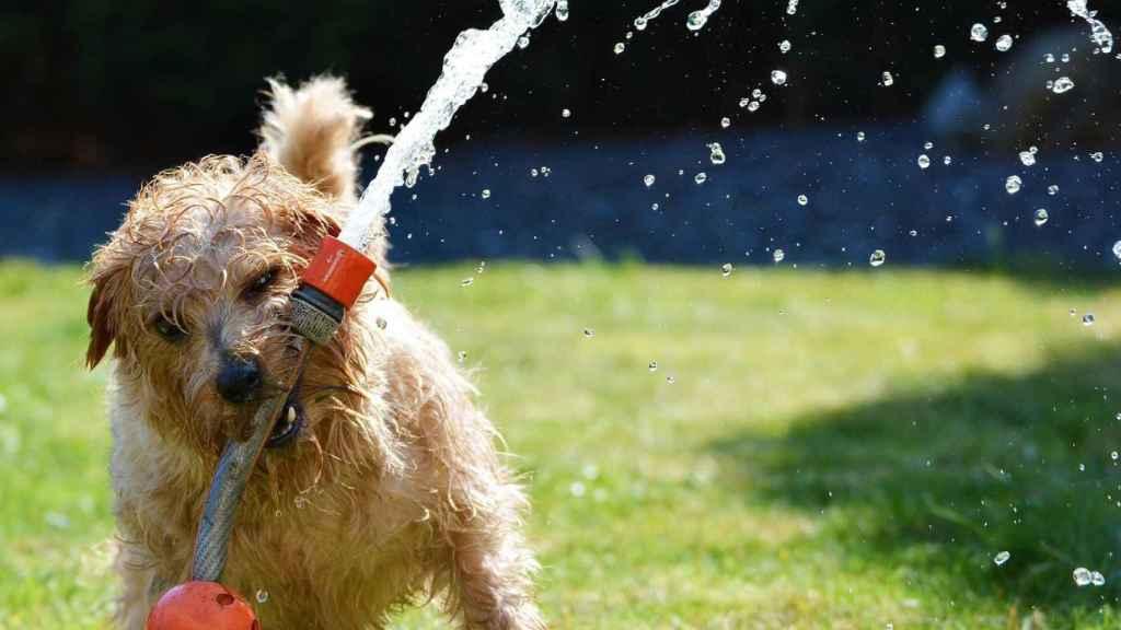 5 consejos para mantener a tu mascota a salvo del calor