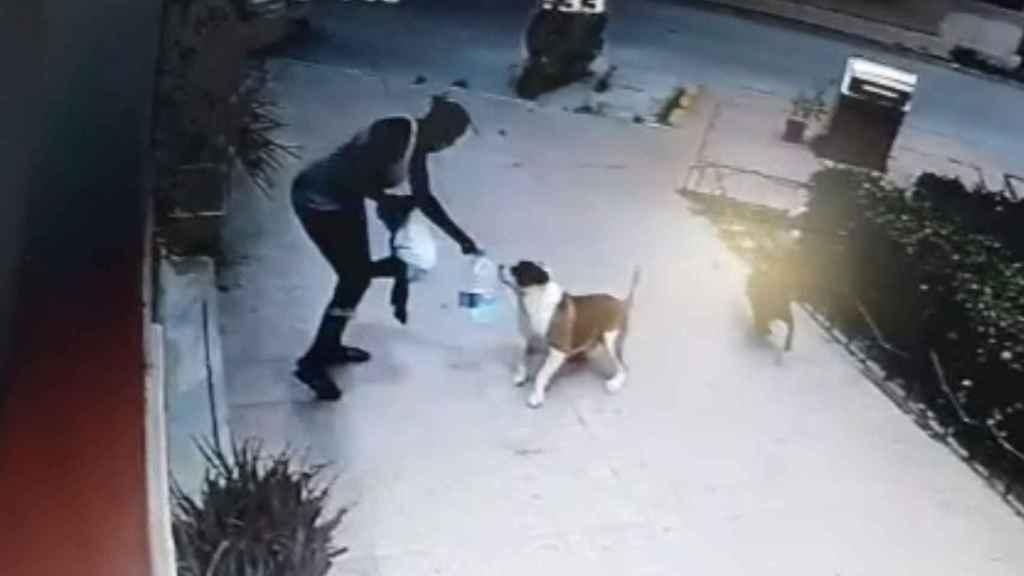Momento en que el animal ataca a la niña.