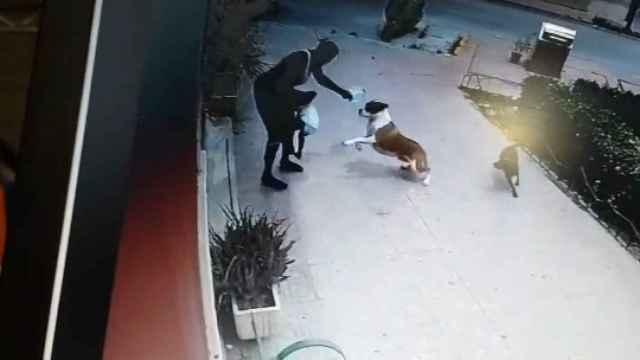 el brutal ataque de un perro a una niña de 23 meses en Ceutí (Murcia)