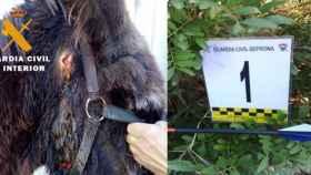 Investigado un menor por matar a un burro y herir a otro en Albacete