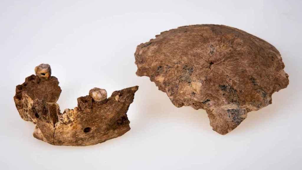 Cráneo y mandíbula de Neher Ramla. / Avi Levin e Ilan Theiler.