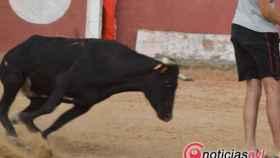 capea fiestas toro