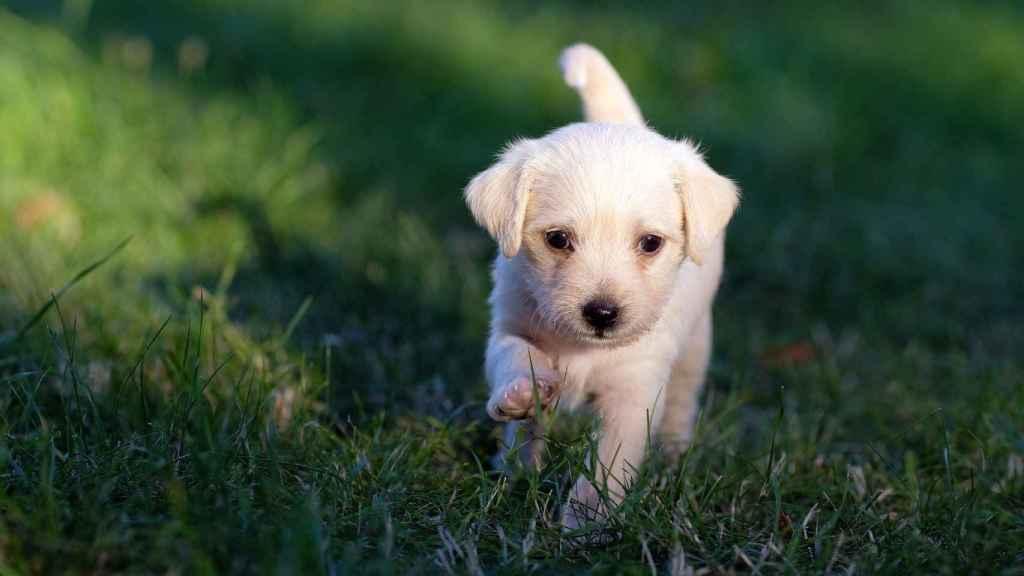 En Cataluña hay registrados un total de 1,5 millones de mascotas.