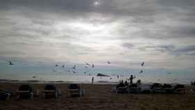 Benidorm cada vez más cerca de la normalidad: playas sin sistema de parcelación desde el sábado