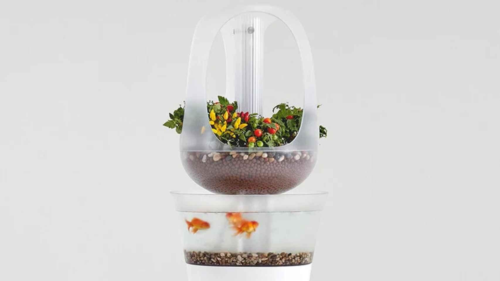 Eva, una pecera que permite criar verduras en casa.