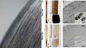La técnica que devuelve el color natural al cabello canoso.