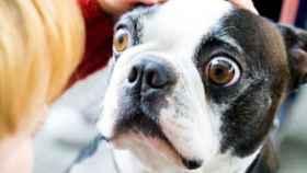 Los perros sufren ansiedad al pasar más tiempo solos con la vuelta a la normalidad