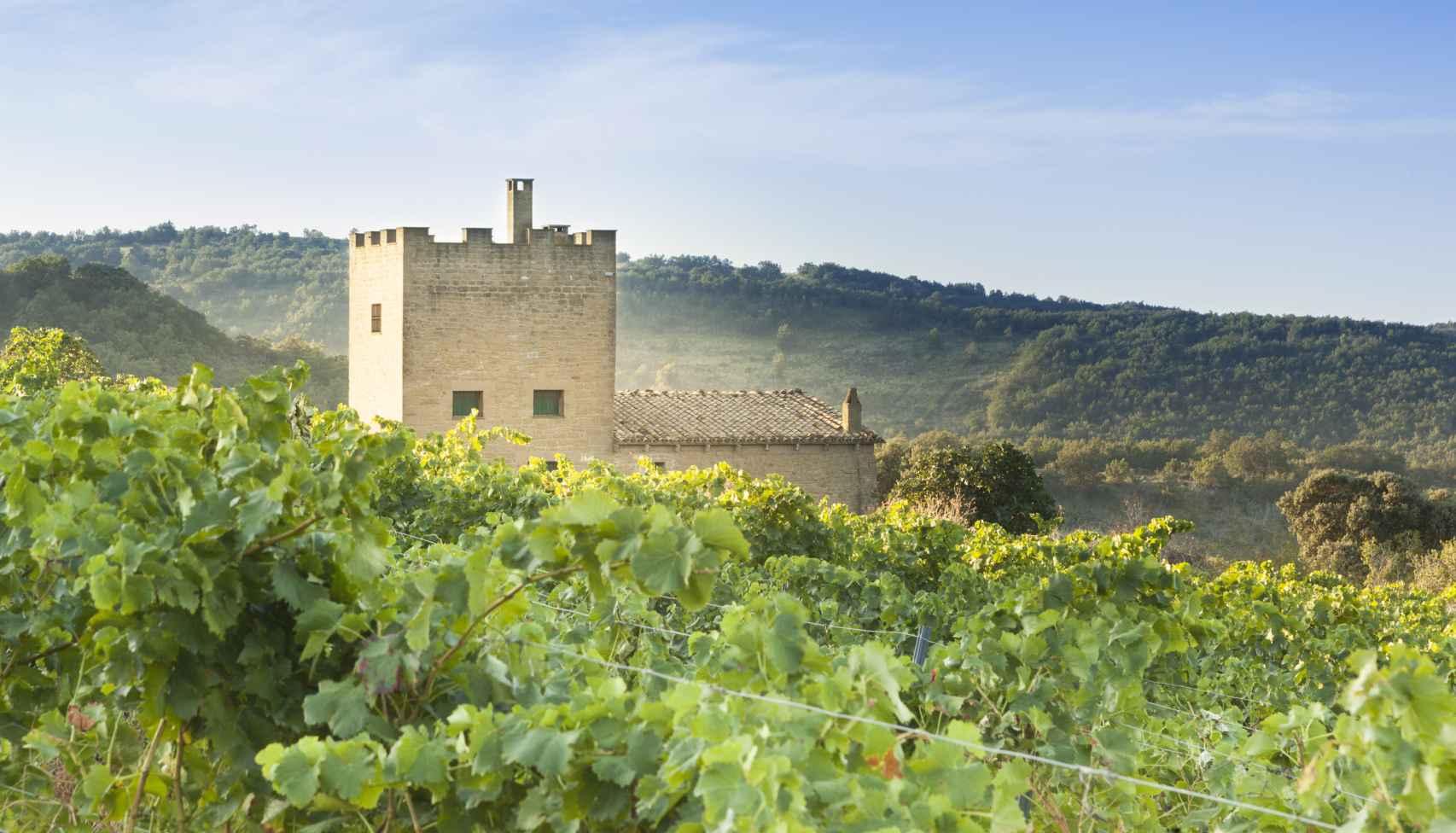 Viñedo en Uncastillo y torre medieval.