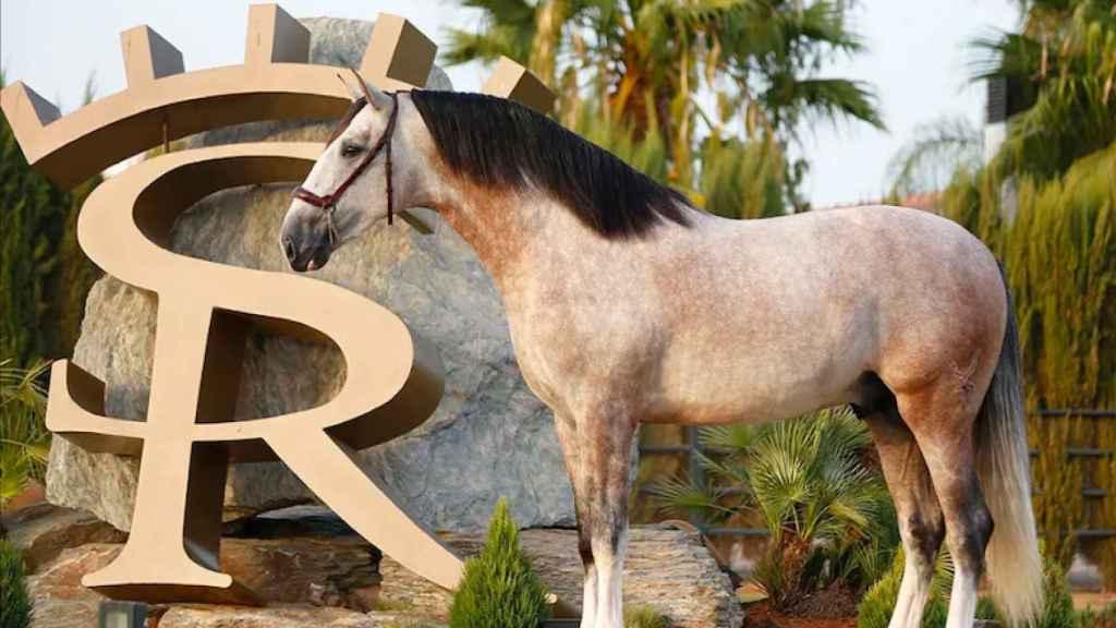 El caballo de Sergio Ramos, Yucatán
