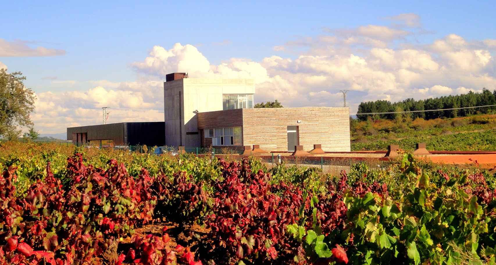 Bodega Losada Vinos de Finca.