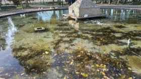 Varios patos en uno de los estanques de Albacete