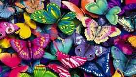 Variedad de mariposas
