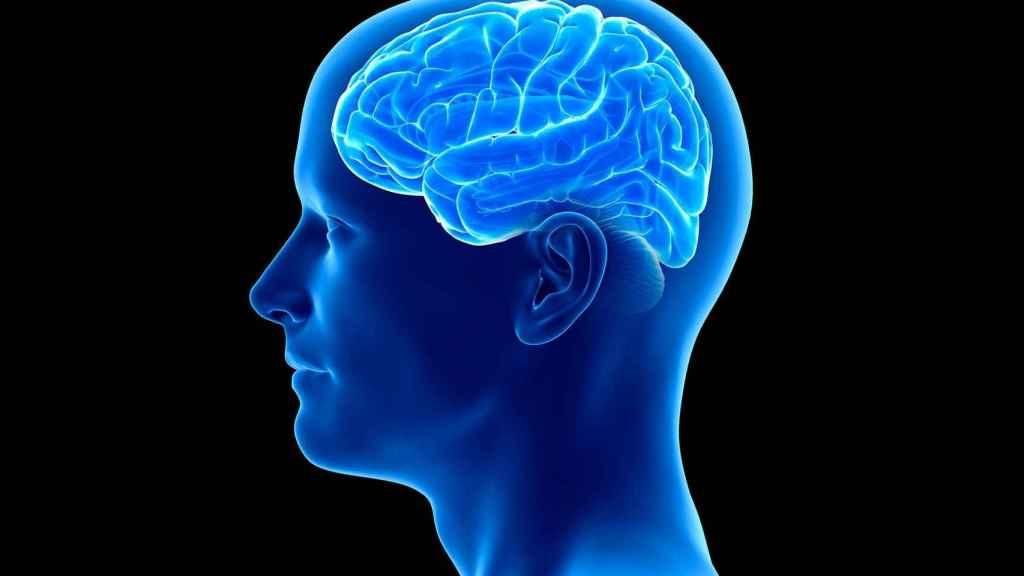 El cerebro es quizá el órgano más desconocido.