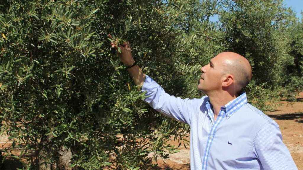 José Gálvez in one of his olive groves.