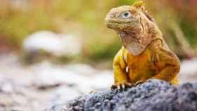Esta es la razón por la que los humanos no soportamos el calor como las iguanas