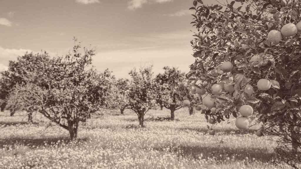 Sector agroalimentario: pilar fundamental de la economía