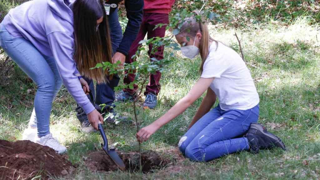 La princesa Leonor arrodillada en el suelo plantando un árbol.