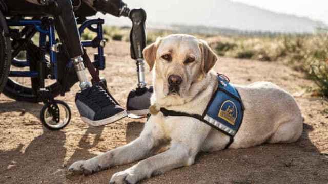 Imagen de un perro de asistencia de la asociación APANEE
