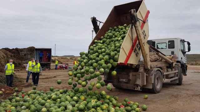 Productores de sandía tirando producto en Almería