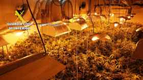 Una de las plantaciones de marihuana descubiertas en Alcaudete de la Jara