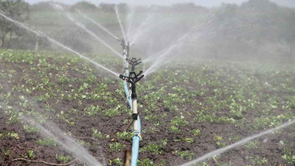 La escasez de recursos hídricos será un reto para la agricultura en el futuro.