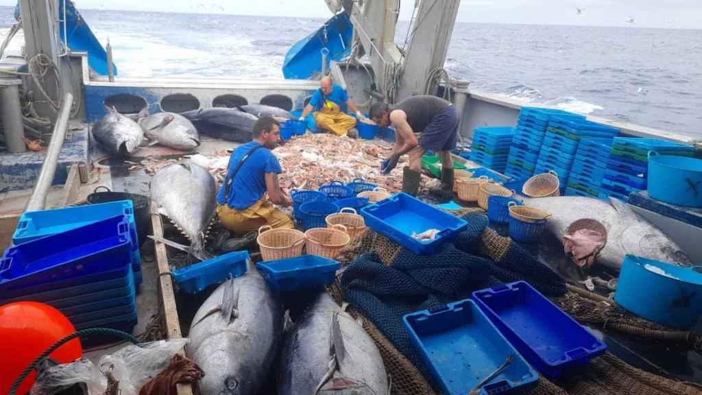 Los pescadores, enfadados al encontrar tanto atún muerto.